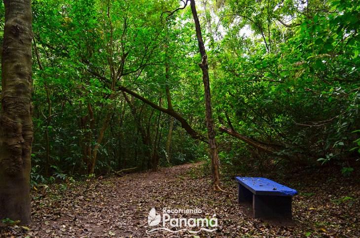 Uno de los bancos del sendero de los árboles cuadrados.