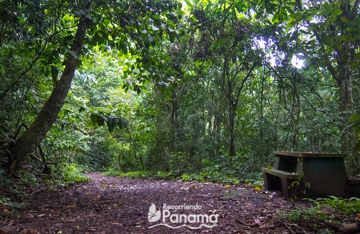 Bench at plantación trail