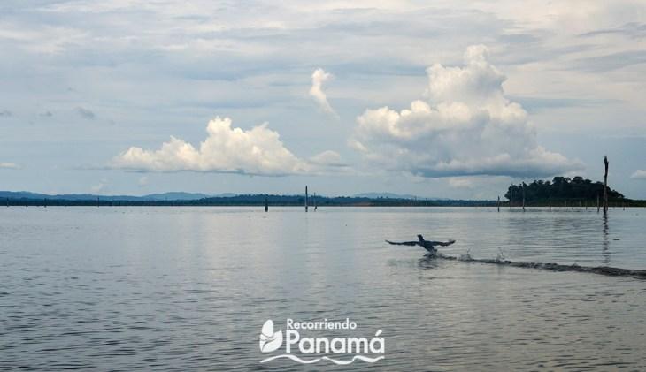 Bayano Lake