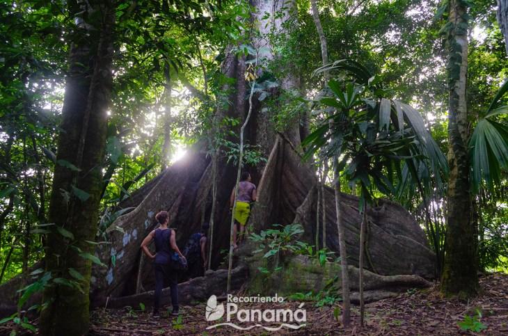 Giant tree and Night Safari