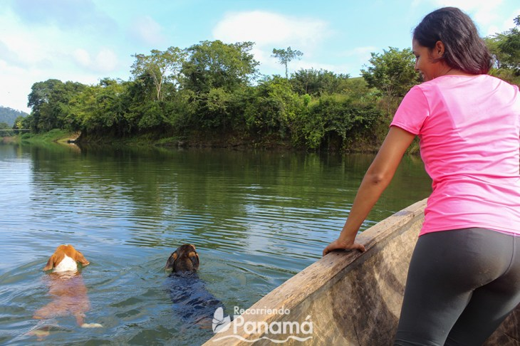 dogs of bayano