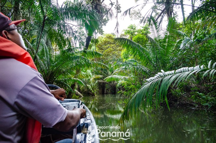 Safari en el Canal de Panamá