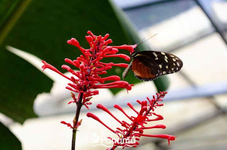 Mariposa en la flor.