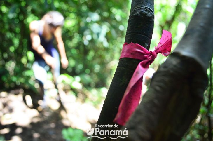 Trail marking tape.