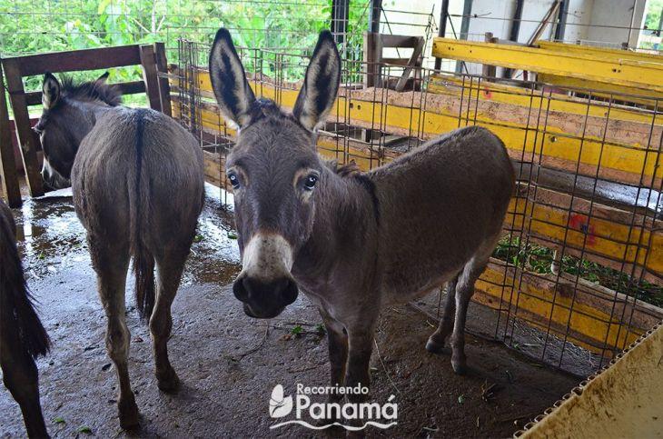 Donkey agro tourism la granja campo y aventura