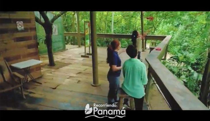 Panama Rainforest Discovery, virtual tours