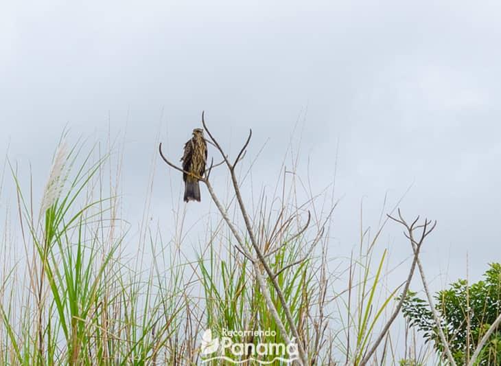 Caracolero. Safari por las Aguas del Canal de Panamá