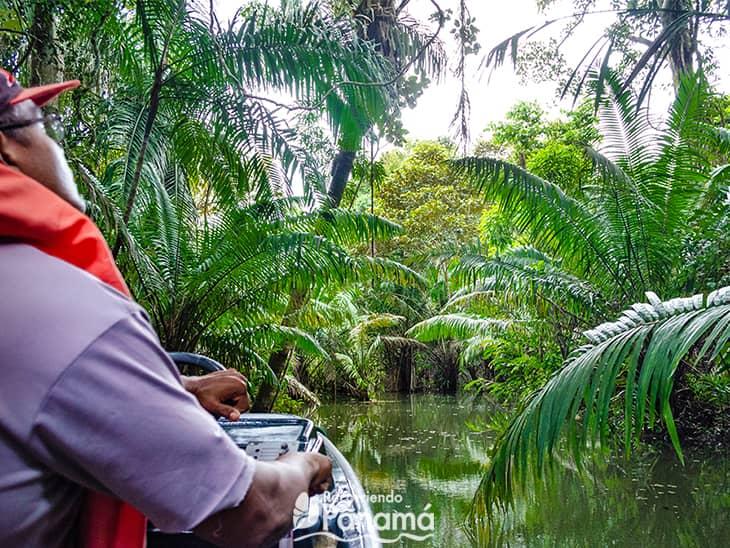 Safari por las aguas Canal de Panamá