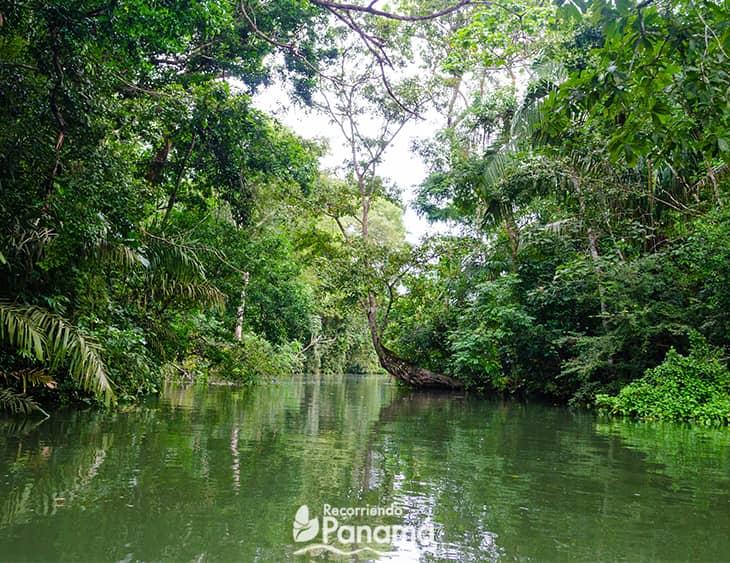 Safari por el Canal de Panamá.