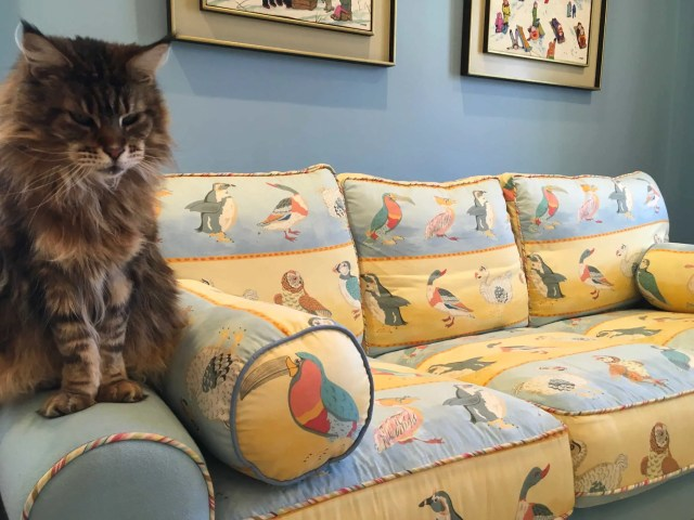 happy cat sitting on child's custom reupholstered sofa