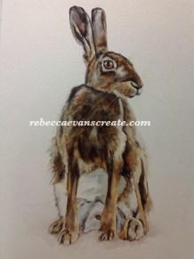 30x40cm 200lb coldpress 'seated hare' watercolour