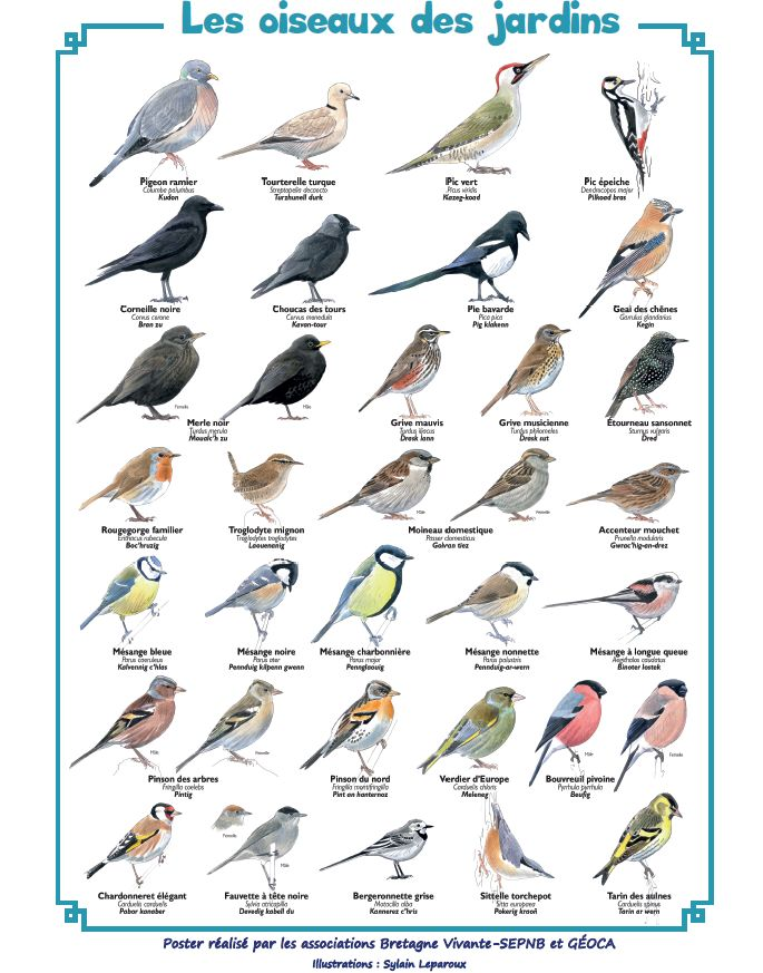 Oiseaux De Nos Jardins Bretagne : oiseaux, jardins, bretagne, Comptez, Oiseaux, Jardins, Récréatiloups