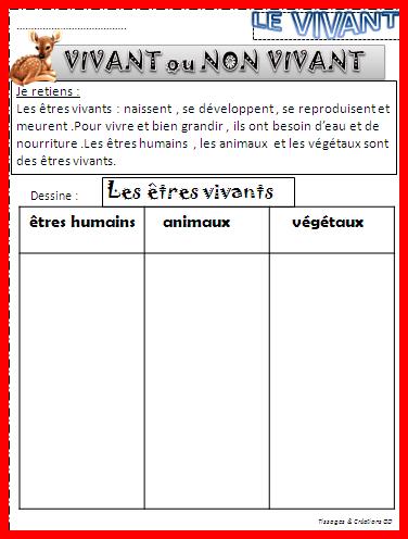Questionner Le Monde Ce1 Le Vivant : questionner, monde, vivant, Séquence, Caractéristiques, Vivant, CP/CE1, ReCreatisse