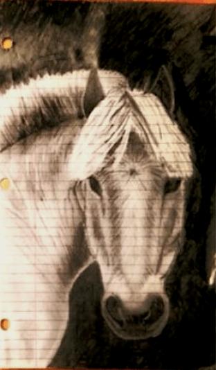 pony-drawing