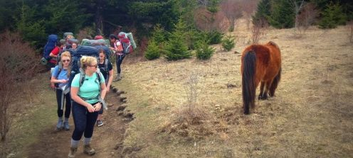 hikers and pony