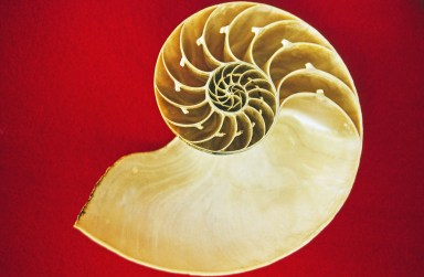 Nautilus Shell: Recursion occurring with the sections.