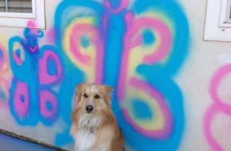 Testors Spray Chalk paint party and photo shoot fun