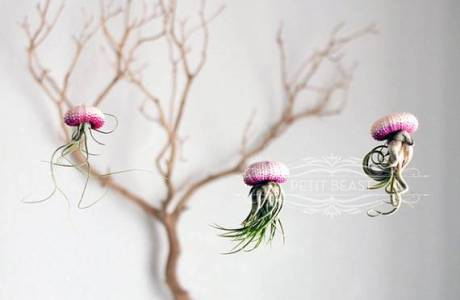 How to make air plant jellyfish