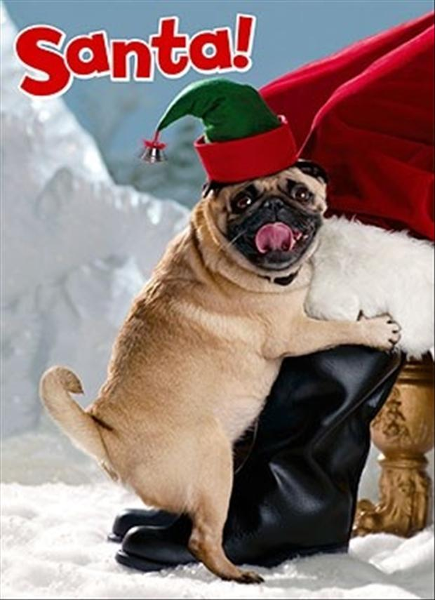 Keeping Your Pet And Santa Safe This Christmas Eve