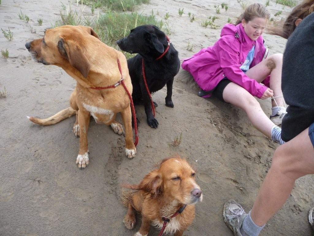 Even the dogs enjoyed the walk!