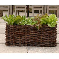 Willow Salad Planter