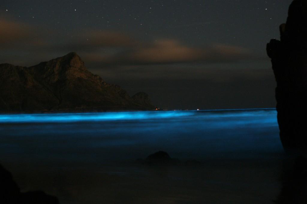 Blue tide of dinoflagellates