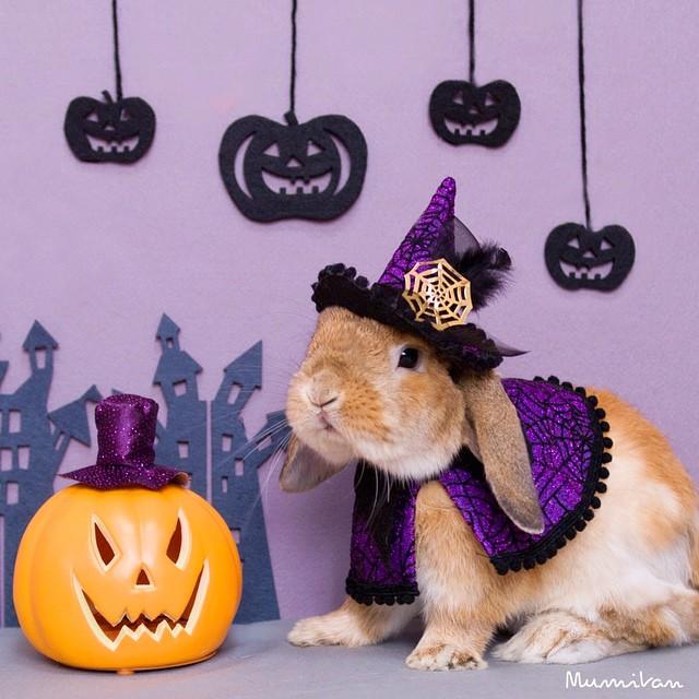 Conejo Pui brujo