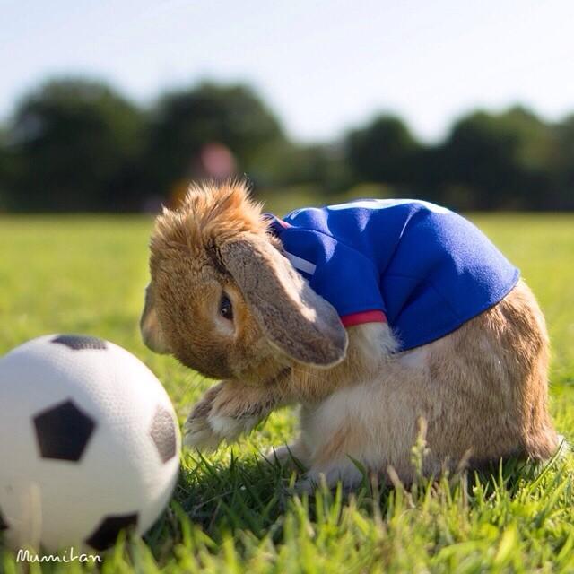 Conejo Pui futbolista