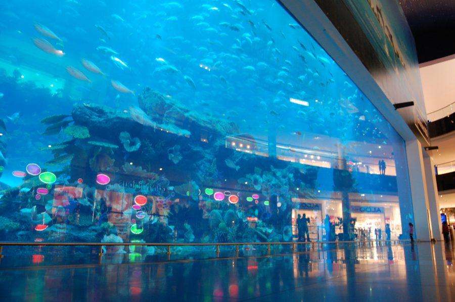 Gigante acuario en Dubai Mall | via:  wikipedia.org