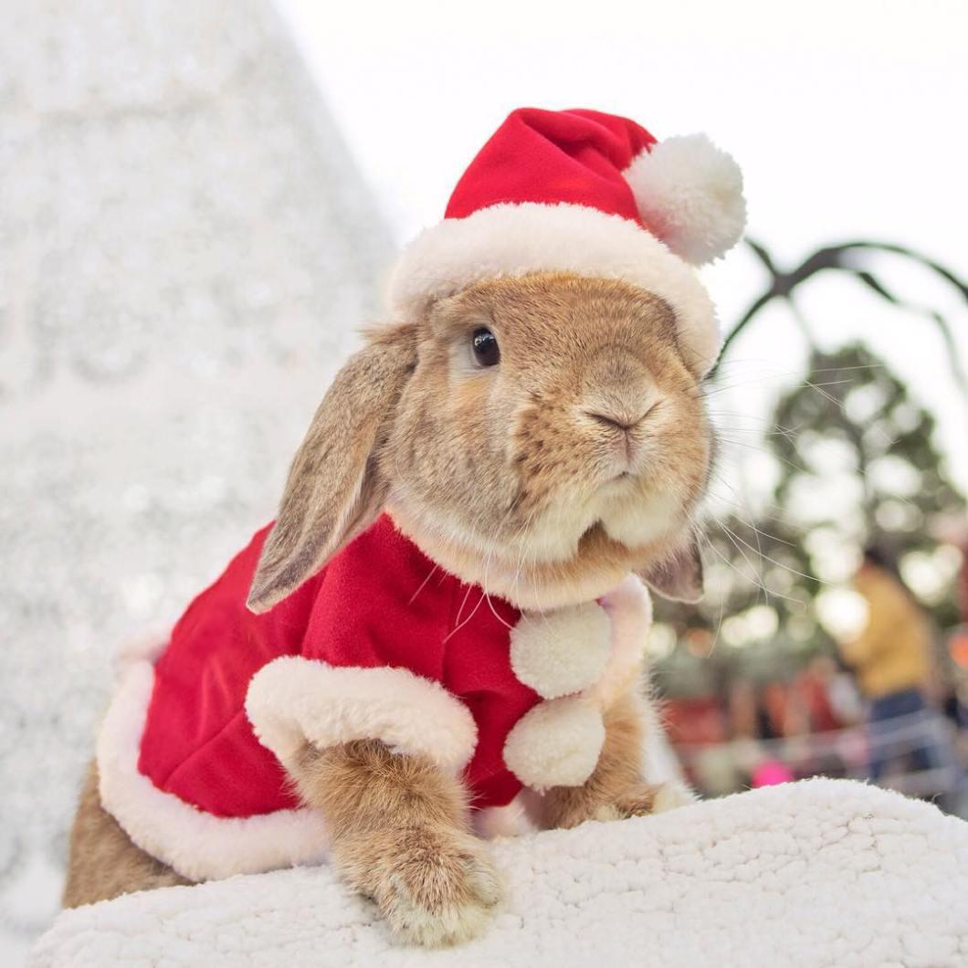 conejo Pui Santa (2)
