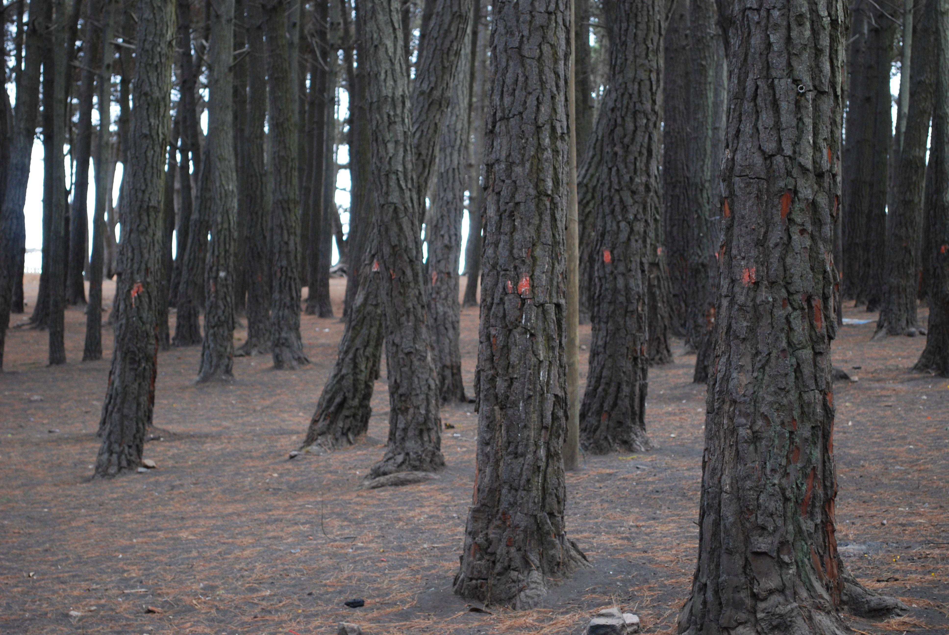 Deforestacion3