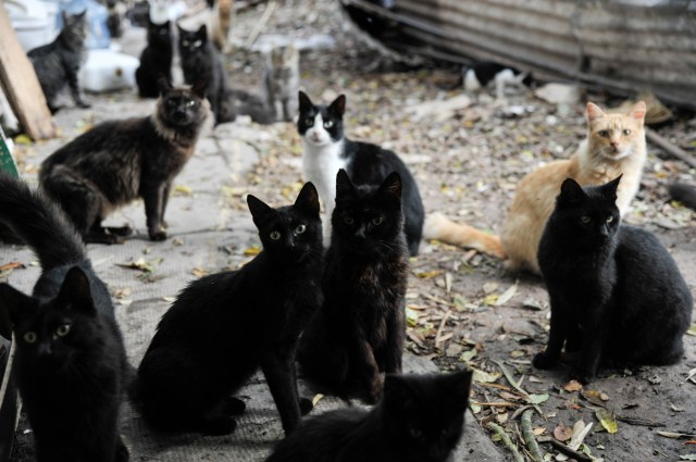 La mayoría de los gatos se volvieron salvajes. / Fotos: Rodrigo Mendoza