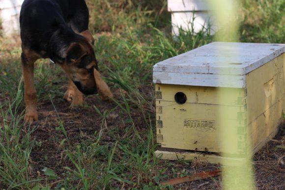 Una colmena vacía en la que solía haber 60.000 o 70.000 abejas, en La Paz, Córdoba. / Fotos: Javier Sinay