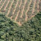 DeforestacionGreenpeace