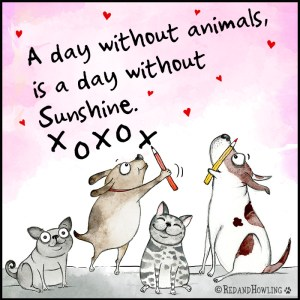 A day without animals is a day without Sunshine