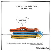 Save a Spider!