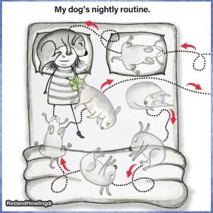 My Dog's Nightly Routine