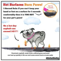 Hot Surfaces Burn Paws!