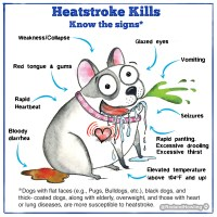 Heatstroke Kills - Know the Signs