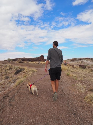 Walking around the Petrified forest