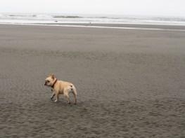 Rosie running free