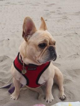 Our little beach baby