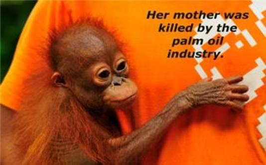 Jakarta animal aid network (jaan) cofounder femke den haas. Dr Oz Declares War on Orangutans - Orangutan Outreach