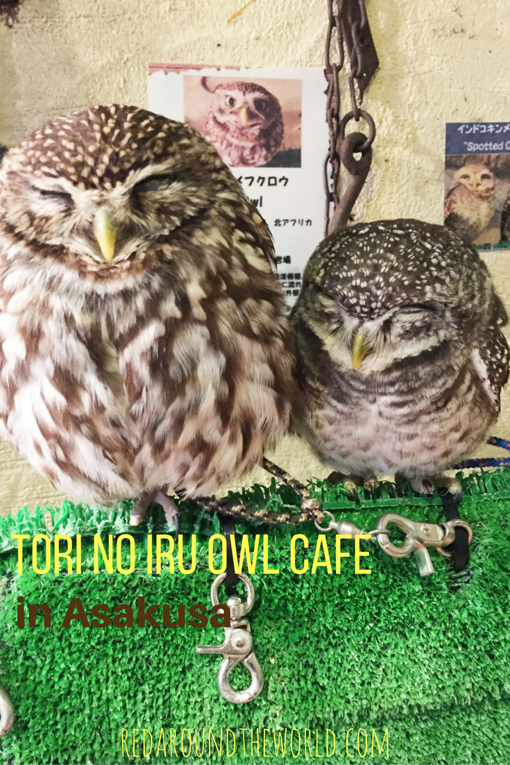 tori-no-iru-owl-cafe
