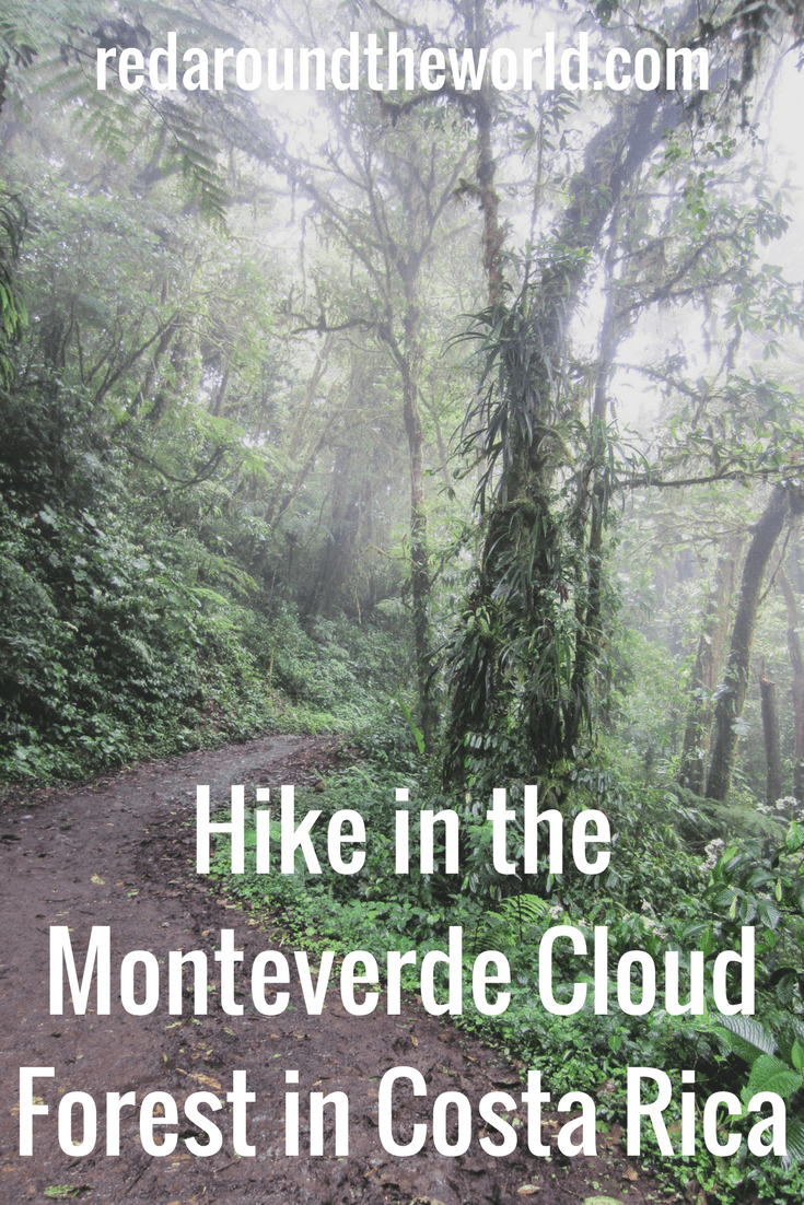 Hike in the Monteverde Cloud Forest in Costa Rica