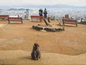arashiyama monkey mountain