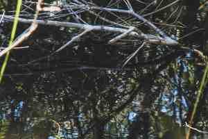 lower suwanee wildlife refuge