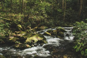 hiking in great smoky mountains national park