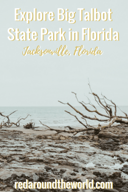 Big Talbot State Park in Jacksonville, Florida is a great park to spend an afternoon. Walk along the beach and go fishing in Big Talbot State Park. #florida #beach #usa #statepark #travel