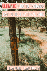 The orchards at Capitol Reef National Park are fun for couples. It's a great option for families visiting Capitol Reef as well.